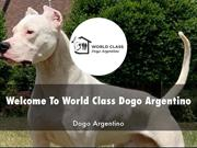 Detail Presentation About World Class Dogo Argentino