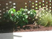 PTSA_Beautification3