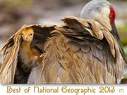 Best of NG photos 2013 (part7)