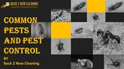 Common Pests and Pest Control