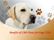 Benefits of CBD Treats for Dogs USA