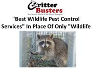 Best Wildlife Pest Control Services In Place Of Only Wildlife