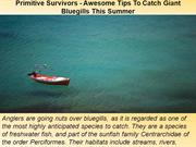 Primitive Survivors - Awesome Tips To Catch Giant Bluegills This Summe