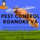 Pest Control Roanoke VA | Killinger Pest Solutions