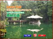 Forest Trail of Alishan, Tw