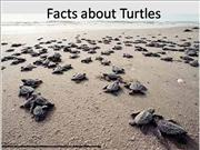 Facts about Turtles