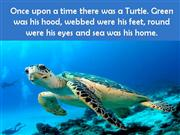 Turtle -  A symbol of luck