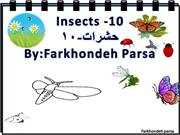 Insects -10