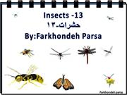 Insects -13