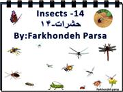 Insects -14