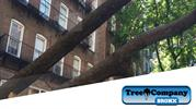 Tree Removal Company in BRONX