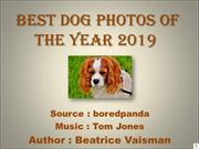 Best Dog Photos Of The Year 2019