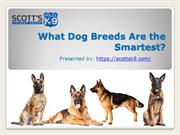 What Dog Breeds Are the Smartest?