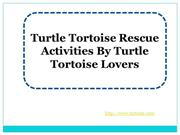 Turtle Tortoise Rescue Activities By Turtle Tortoise Lovers