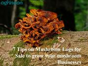 7 Tips on Mushroom Logs for Sale to grow your mushroom Businesses