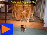 Cats and Dogs Having Fun