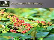 Homestay in Chikmagalur | Kalyancool Homestay