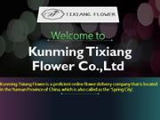 Fresh Cut Flowers - Kunming Tixiang Flower Co