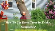 How To Cut Down Trees In Tricky Situations?