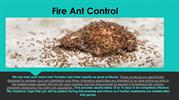 Fire Ant Control-converted