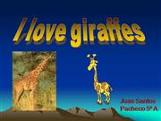 I love giraffes.