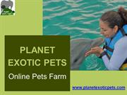 Cute Exotic Pets For Sale at Planet Exotic Pet