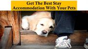 Get The Best Stay Accommodation With Your Pets