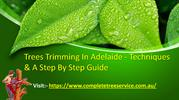 Trees Trimming In Adelaide - Techniques & A Step By Step Guide