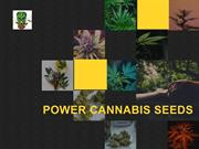 Cannabis Seeds Online | Afghan Selection Seeds