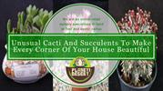 Unusual Cacti And Succulents To Make Every Corner of Your House Beauti
