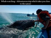 Whale watching - Adventurous trip which takes you close to the nature