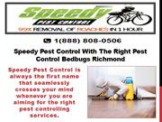 Speedy Pest Control With The Right Pest Control Bedbugs Richmond