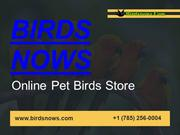 Buy Bird Cages Online At Affordable Price