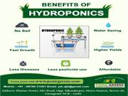 hydroponics in india- ponicgreens- hydroponic in india