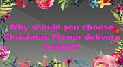 Tips to  choose Christmas Flower delivery Ireland