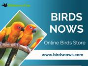 Buy Birds Online At Best Rate And Bring To Your Home