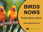 buy bird cages online at best range prices