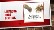 Lavancha Root Benefits You Must Be Aware Of - Health And Nature