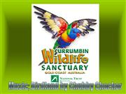 currumbin sanctuary