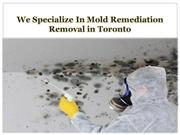 We Specialize In Mold Remediation Removal in Toronto