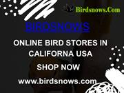 BUY PET BIRDS ONLINE