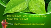 Tree Removal What You Should Know About Tree Removal