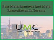 Best Mold Removal And Mold Remediation In Toronto