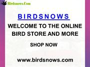 BIRDSNOWS