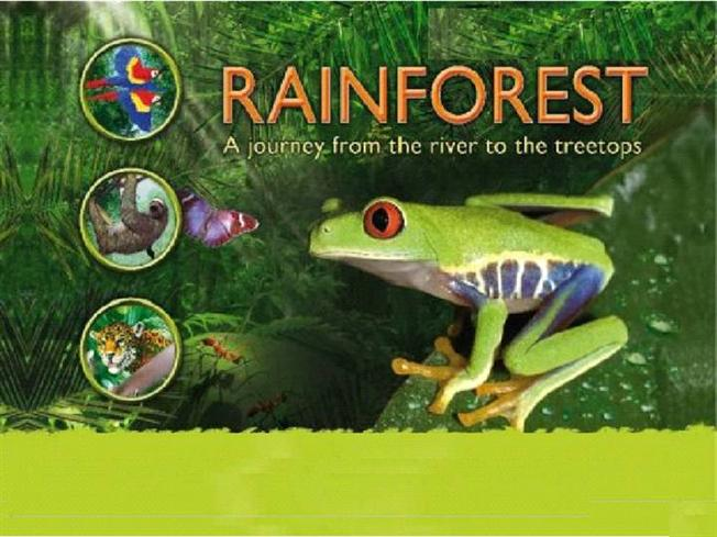 Rainforest powerpoint template juvecenitdelacabrera rainforest powerpoint template toneelgroepblik Gallery