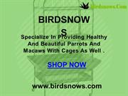 Buy Bird Cages Online at Best prices