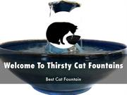 Thirsty Cat Fountains Prersentation