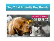 Top 7 Cat-Friendly Dog Breeds for your Felines | BudgetVetCare