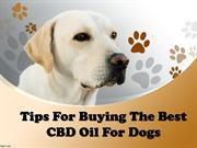 Tips For Buying The Best CBD Oil For Dogs