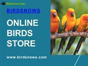 Buy Birds Online From Birdsnows Store At Reasonable price